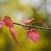 Autumn Themed Branch