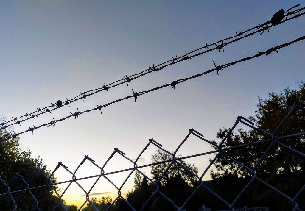 Barbed wire by boxplayer