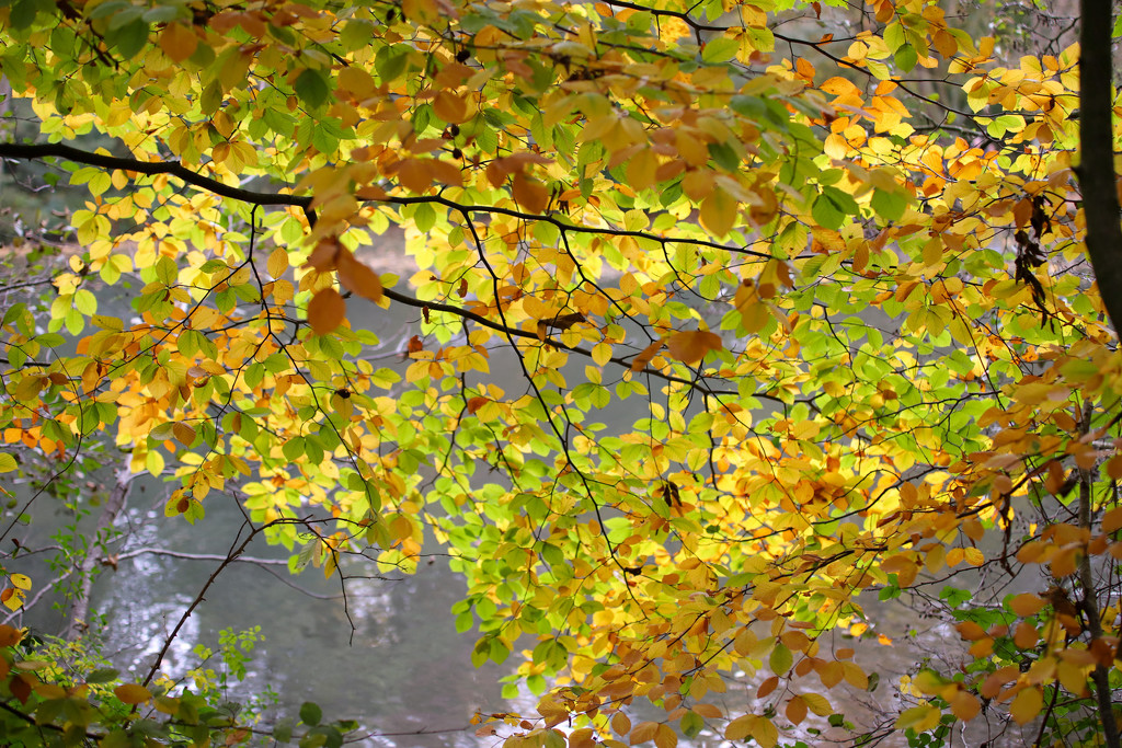 Autumn's Splendour by phil_sandford