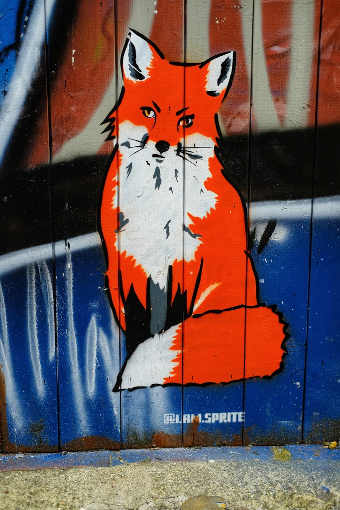 Urban fox by 4rky