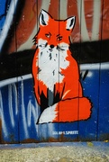 21st Oct 2020 - Urban fox