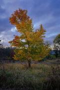 23rd Oct 2020 - Fall Tree
