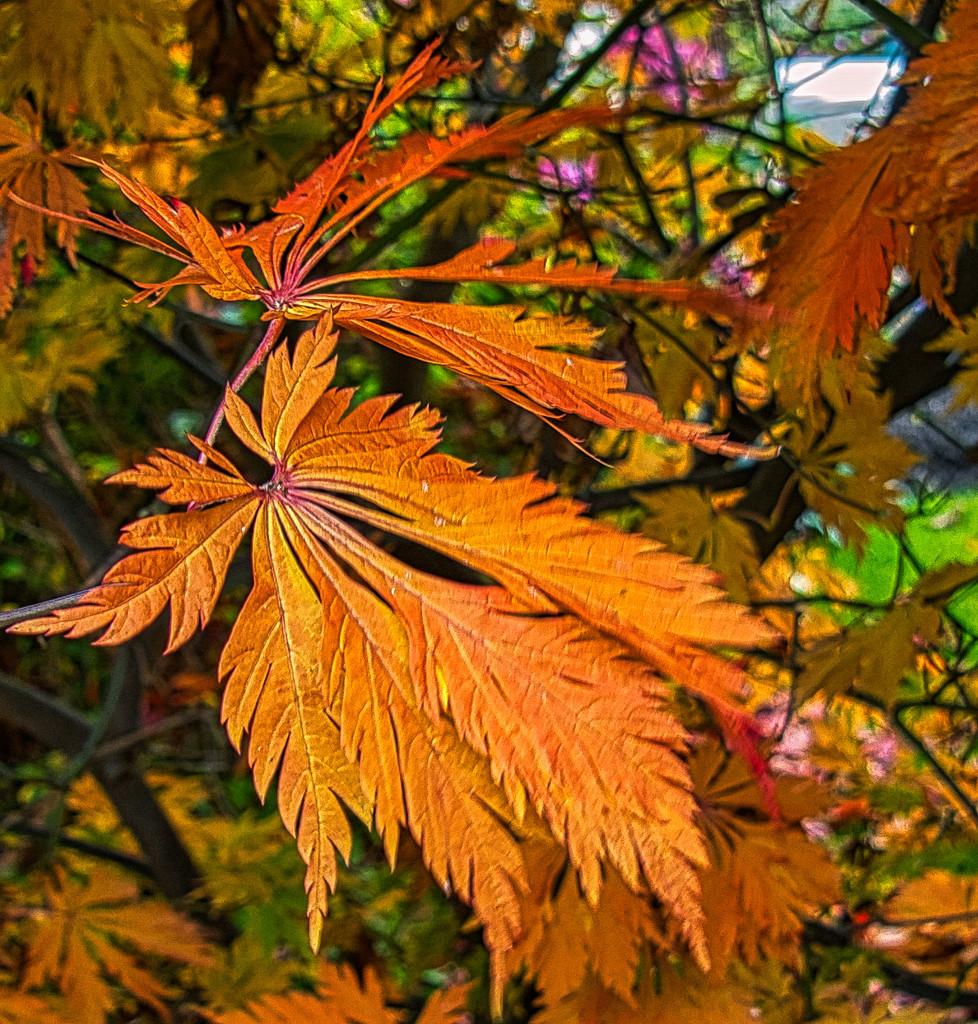 Autumn Leaf. by tonygig