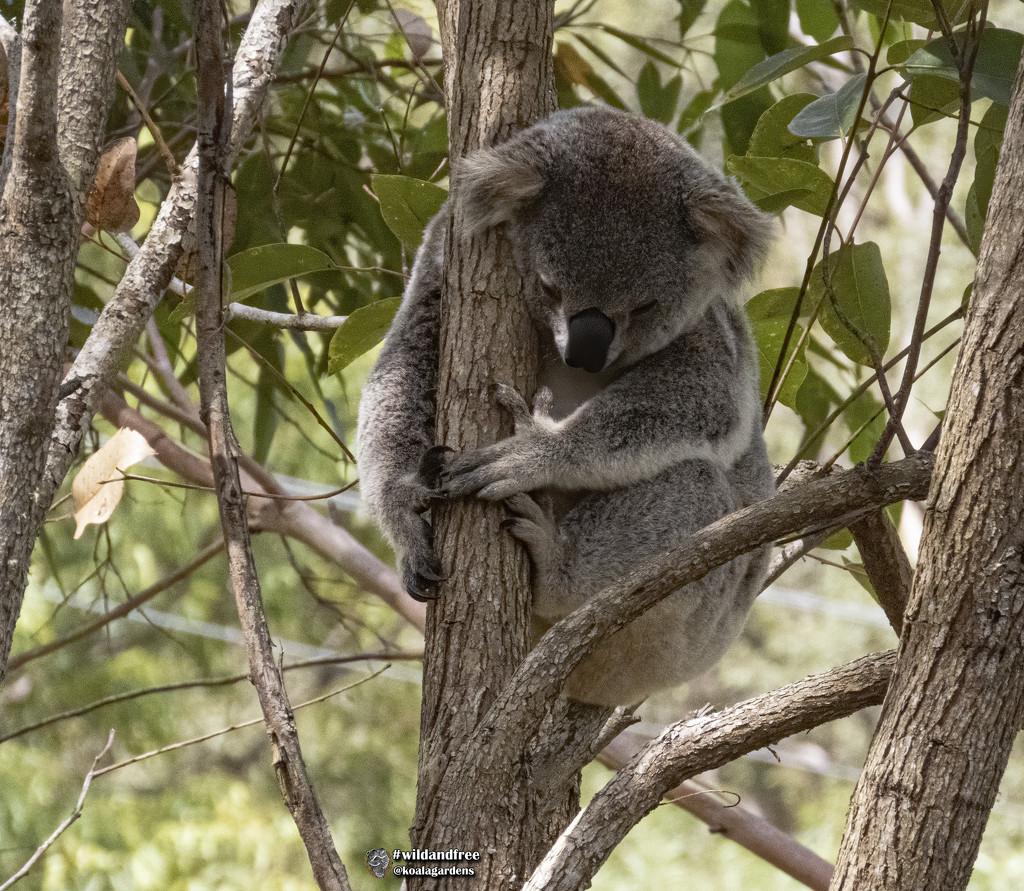 too full to move by koalagardens