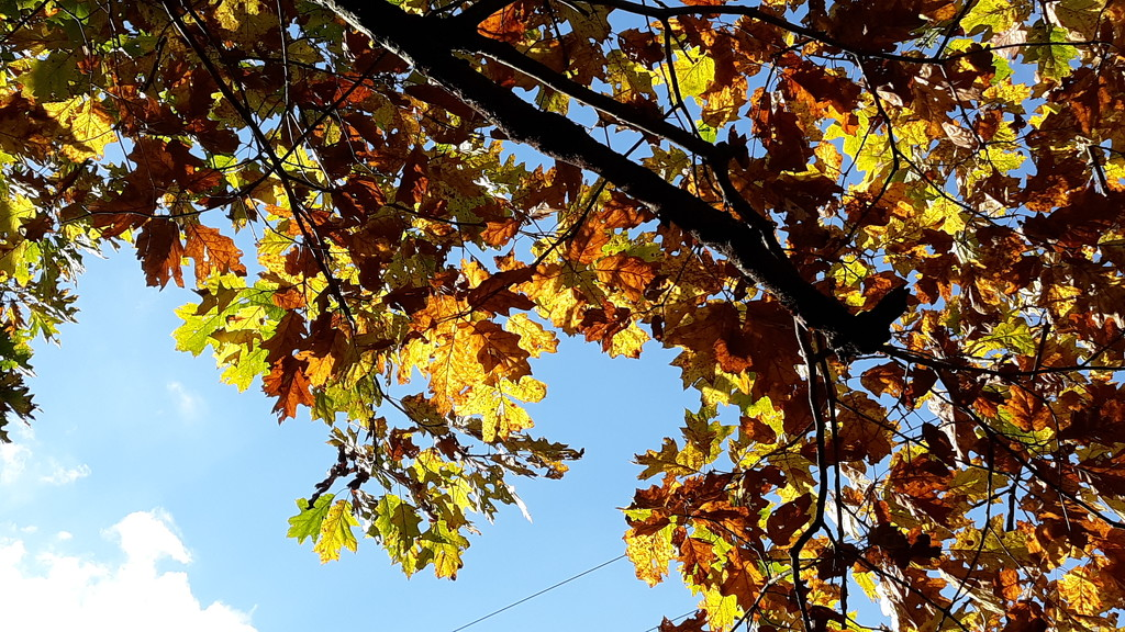 Fall Leaves by julie