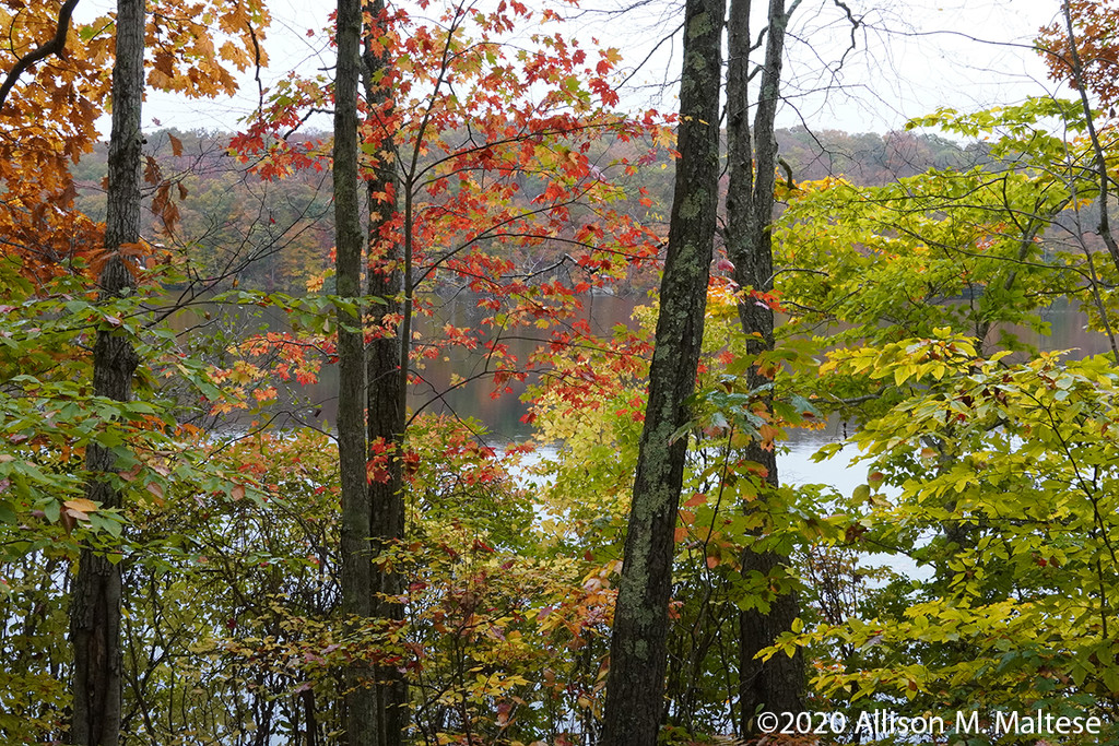 Fall Color 2 by falcon11