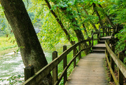 10th Oct 2020 - Boardwalk of Trees