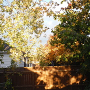 24th Oct 2020 - Late Afternoon Sunlight and Shadow