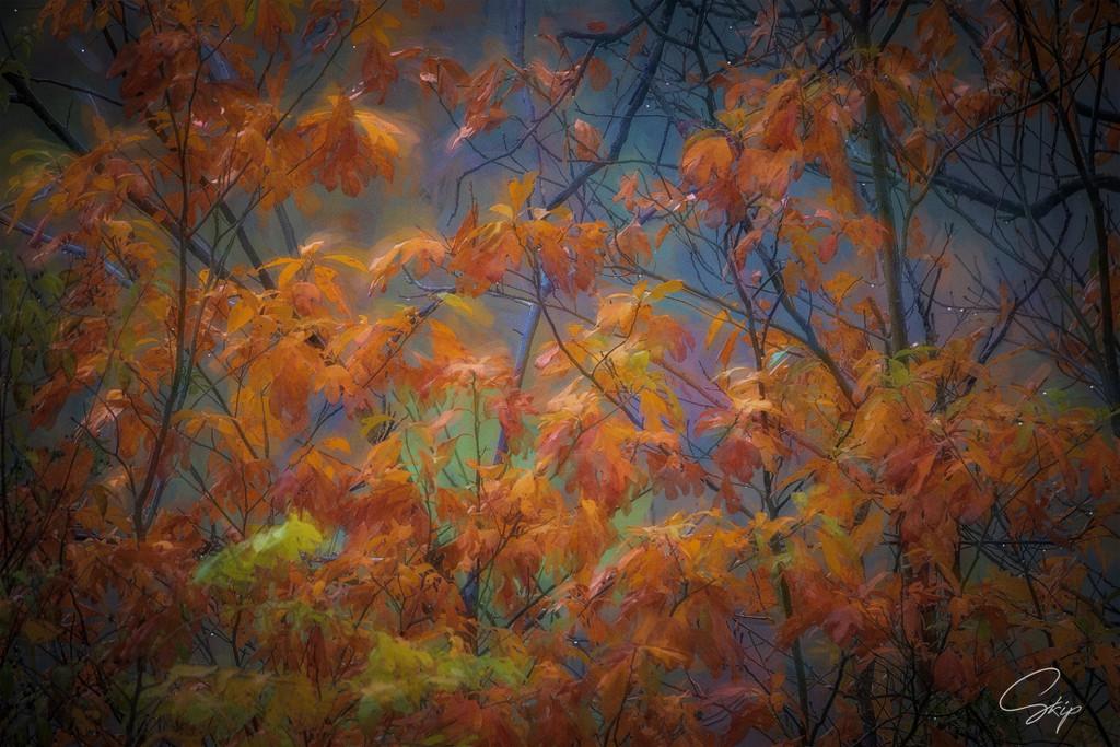 Autumn by skipt07