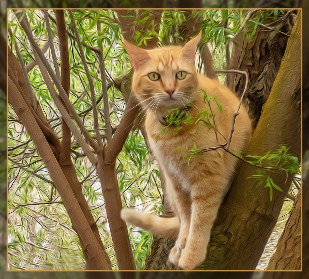 Minky framed by trees by ludwigsdiana