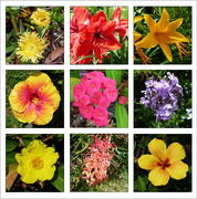25th Oct 2020 - Flower Collage 2