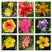 Flower Collage 2