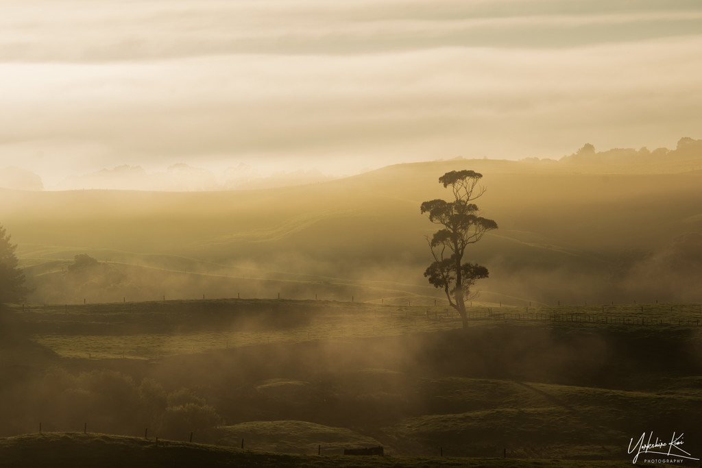 Another Mist by yorkshirekiwi