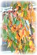 25th Oct 2020 - Autumn  in the garden