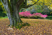 20th Oct 2020 - Autumn at Mottisfont