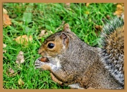 25th Oct 2020 - Nibbling A Beech Nut