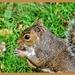 Nibbling A Beech Nut