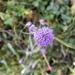 Hairy flower!