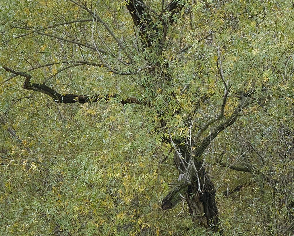 Green Tree  by gardencat