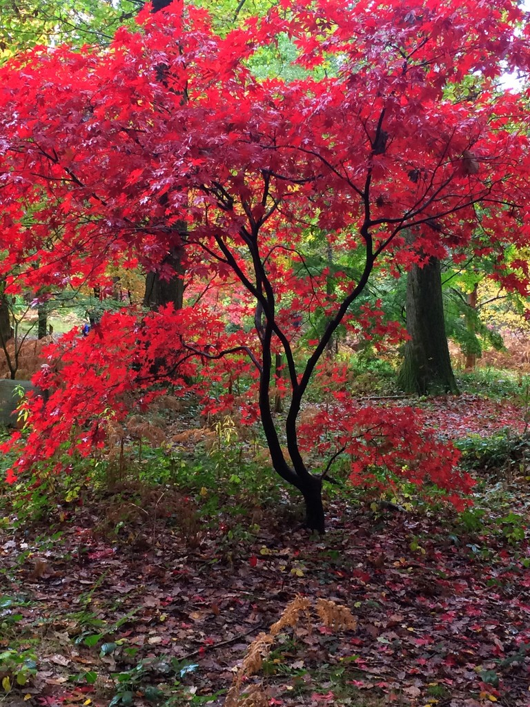 The arboretum at Queenswood in full colour! by snowy