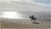 25th Oct 2020 - A lovely day for it! Riding on the beach must be so exhilarating!