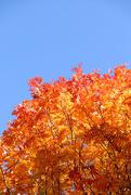 25th Oct 2020 - Autumn Gold