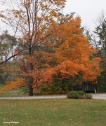 24th Oct 2020 - Fall colors