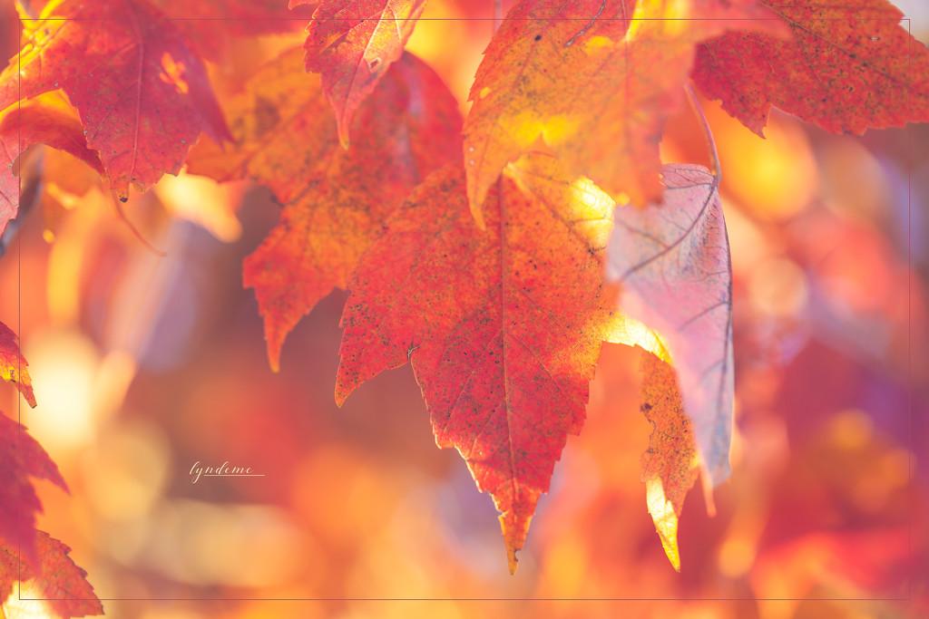 Aglow by lyndemc