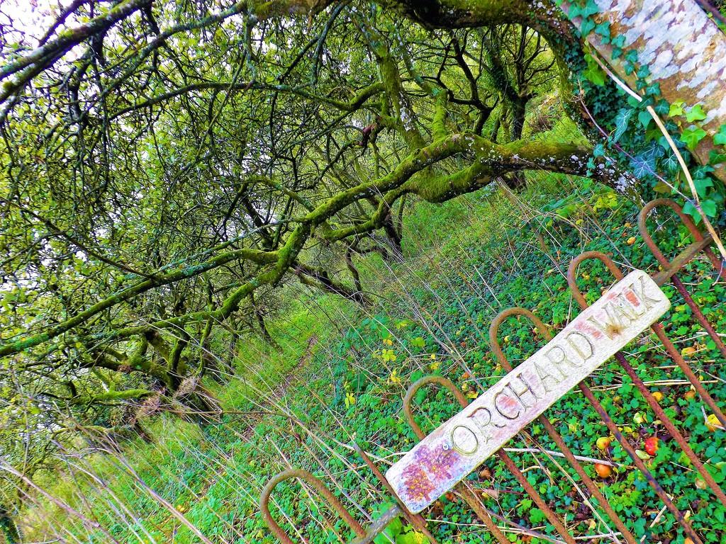 Orchard Walk  by ajisaac