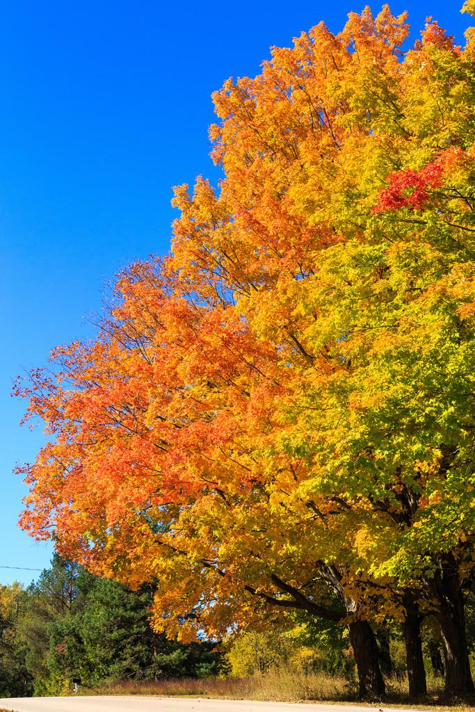 The Beauty of Fall by photograndma