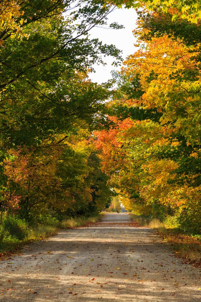 Fall Lane by photograndma