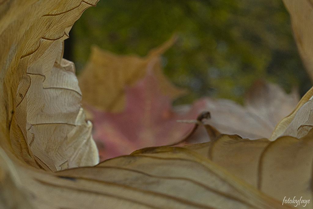 Looking through a leaf by fayefaye