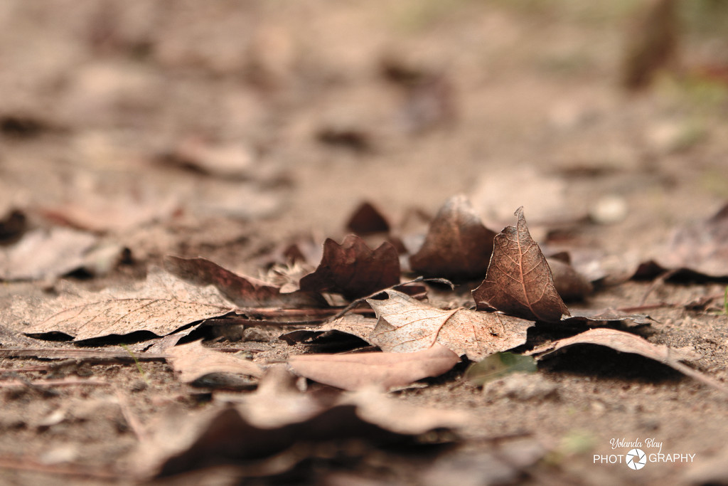 autumn by yolanda