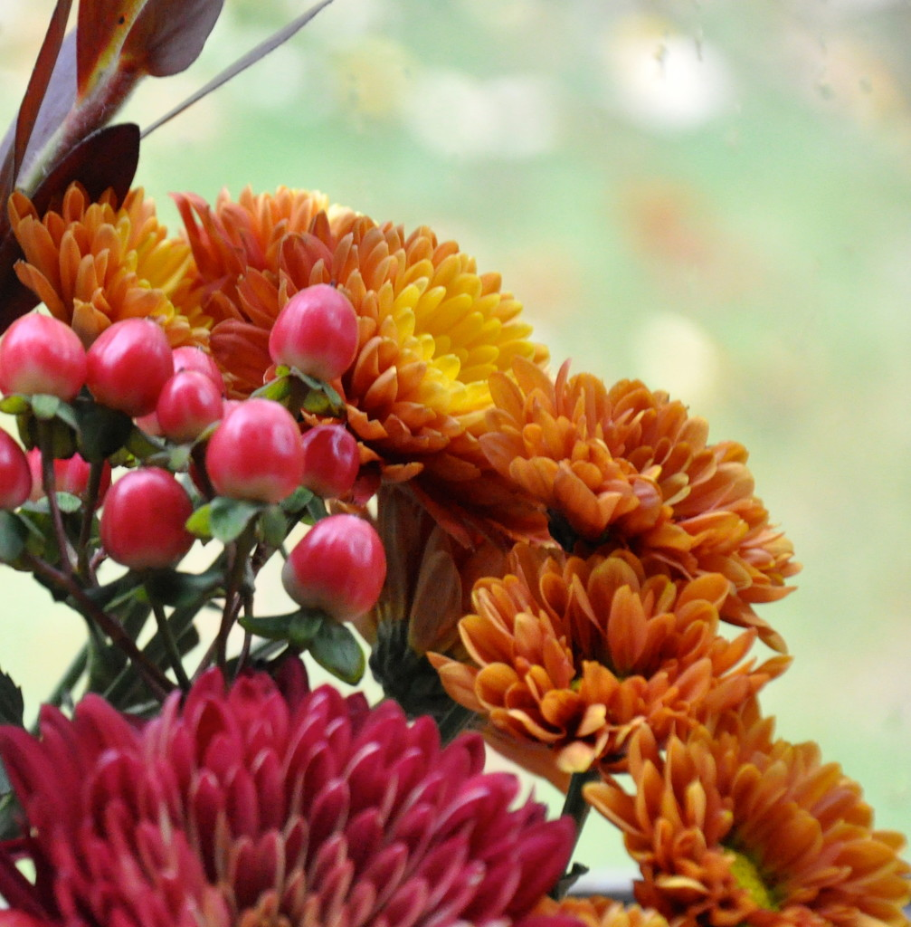 more fall flowers by sailingmusic