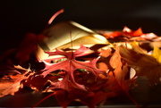25th Oct 2020 - Turning the leaf...