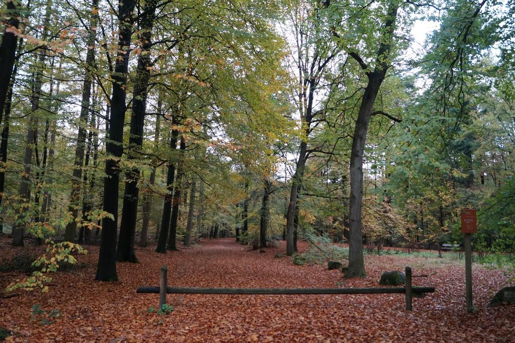 woodlands by gijsje