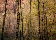 25th Oct 2020 - Woodland