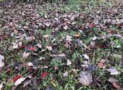 23rd Oct 2020 - Autumn Grass