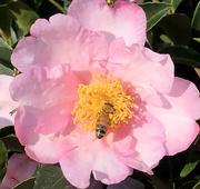 23rd Oct 2020 - Autumn honey