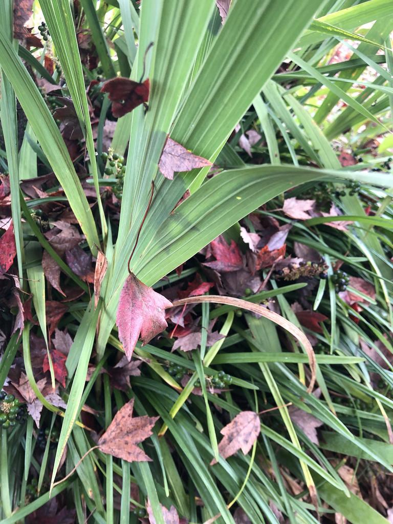 Leaves in the leaves by homeschoolmom