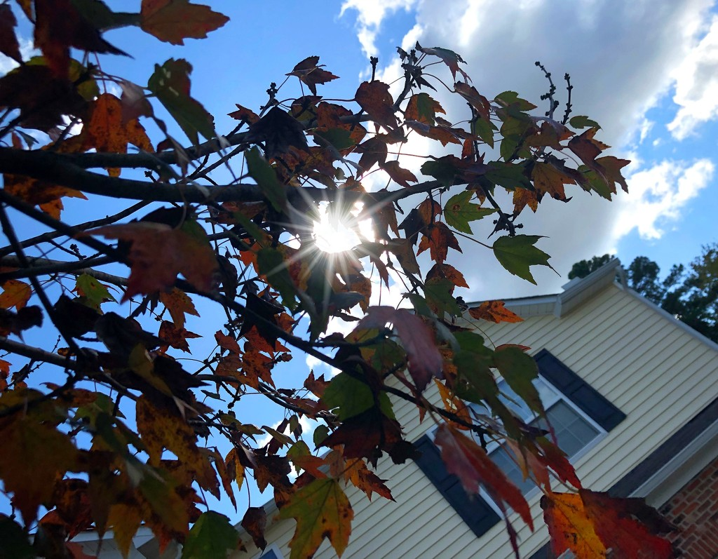 Sunlight in the leaves by homeschoolmom