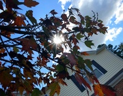 24th Oct 2020 - Sunlight in the leaves