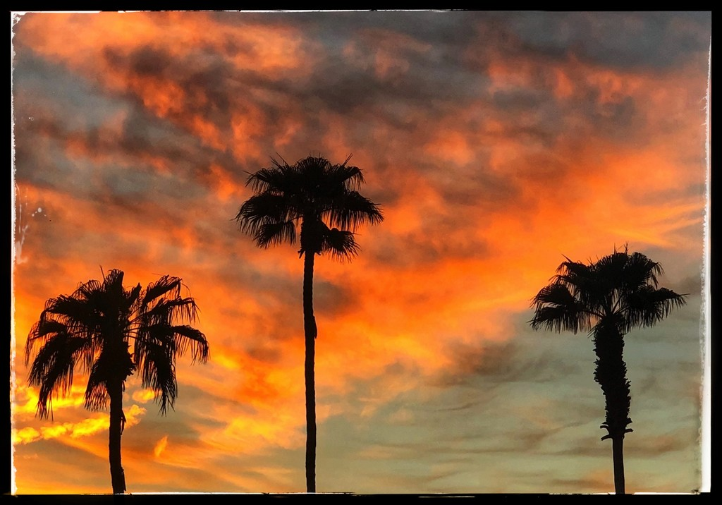 Palms at Sunset by redy4et