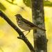 Unknown Bird!