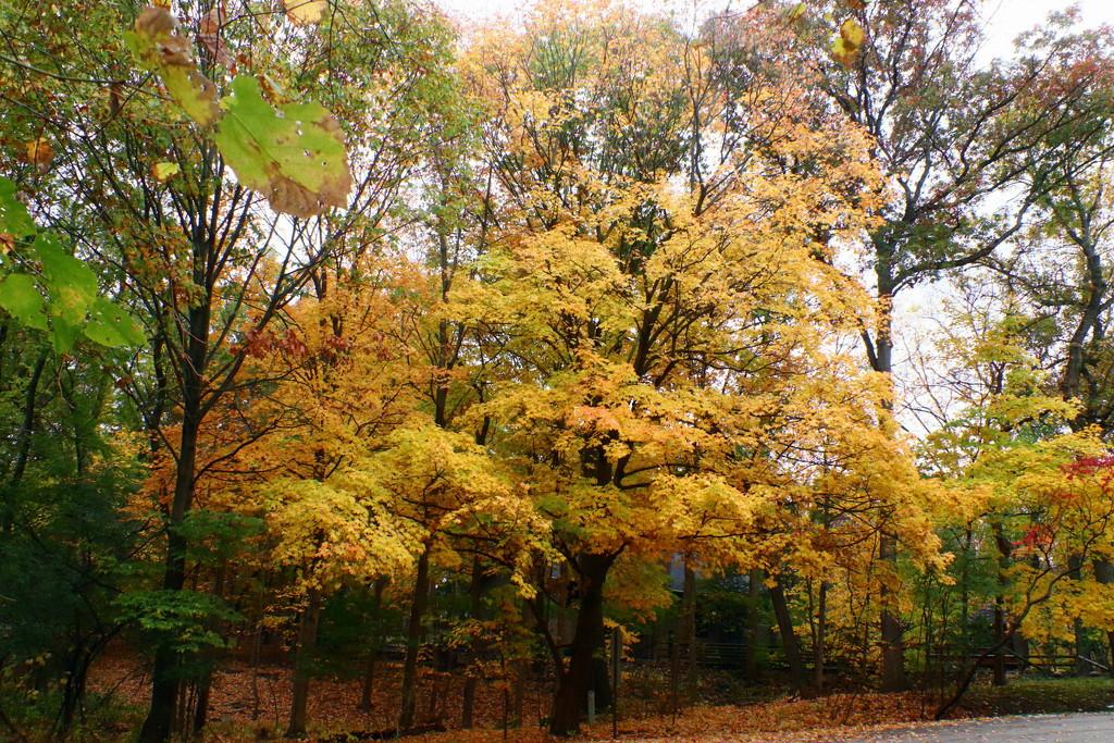 Beautiful Yellows by randy23