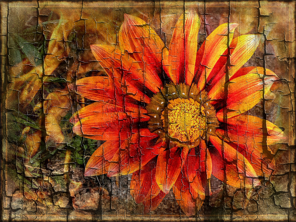 The last Gazania  by ludwigsdiana