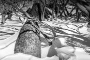 26th Oct 2020 - Snow scene