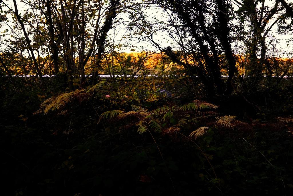 Autumns Light 01 by allsop