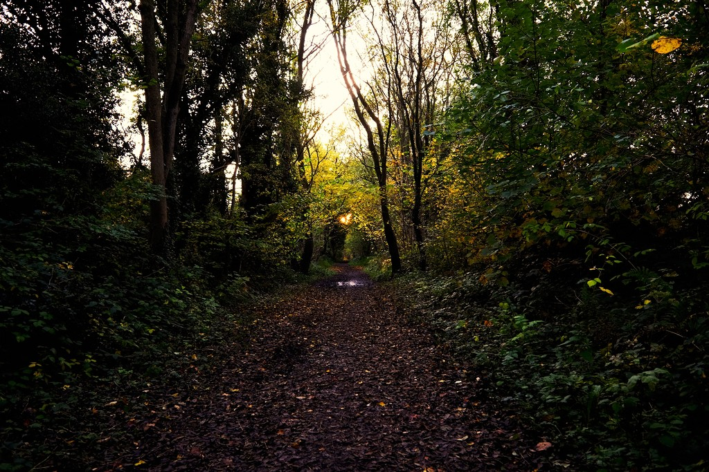 Autumns Light 03 by allsop