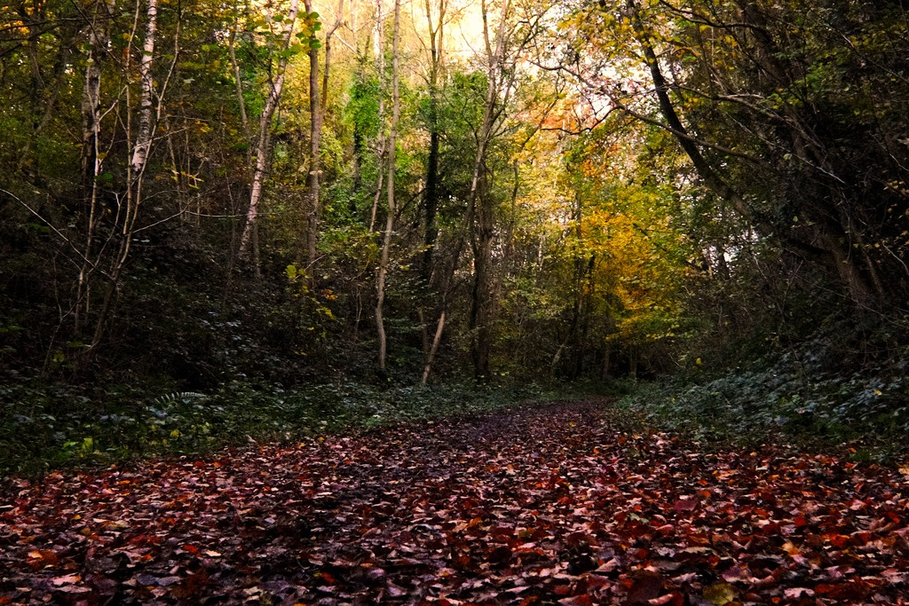 Autumns Light 02 by allsop